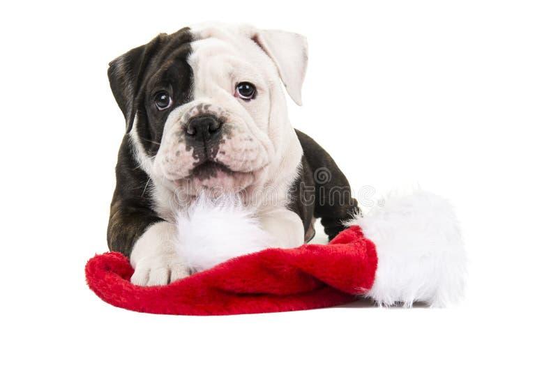 Χαριτωμένο αγγλικό κουτάβι μπουλντόγκ που ξαπλώνει με το καπέλο του santa στοκ φωτογραφία με δικαίωμα ελεύθερης χρήσης