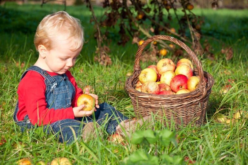 Χαριτωμένο αγόρι στον οπωρώνα μήλων στοκ φωτογραφία