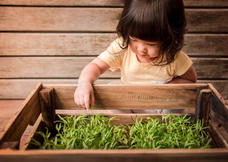 Χαριτωμένο ασιατικό κορίτσι που απολαμβάνει με τις μικρές εγκαταστάσεις στο ξύλινο δοχείο, Gardeni στοκ εικόνες