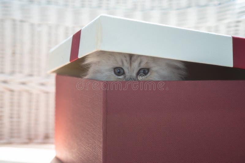 χαριτωμένο γατάκι δώρων κι&bet στοκ φωτογραφία