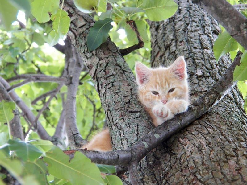 Χαριτωμένο γατάκι επάνω στη χαλάρωση δέντρων στοκ εικόνες