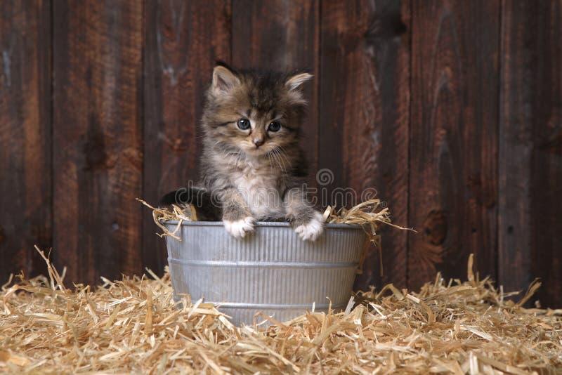 Χαριτωμένο γατάκι με το άχυρο σε μια σιταποθήκη στοκ φωτογραφία
