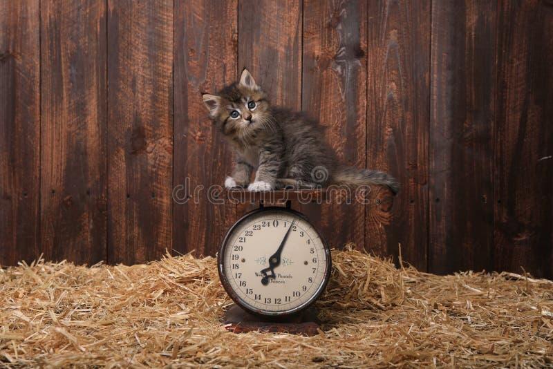 Χαριτωμένο γατάκι με το άχυρο σε μια σιταποθήκη στοκ φωτογραφίες με δικαίωμα ελεύθερης χρήσης