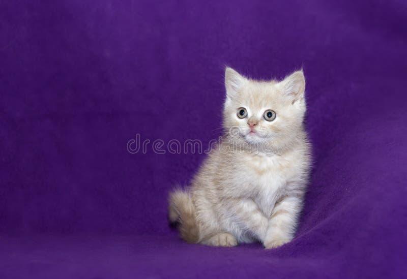 χαριτωμένο γατάκι μικρό στοκ εικόνες