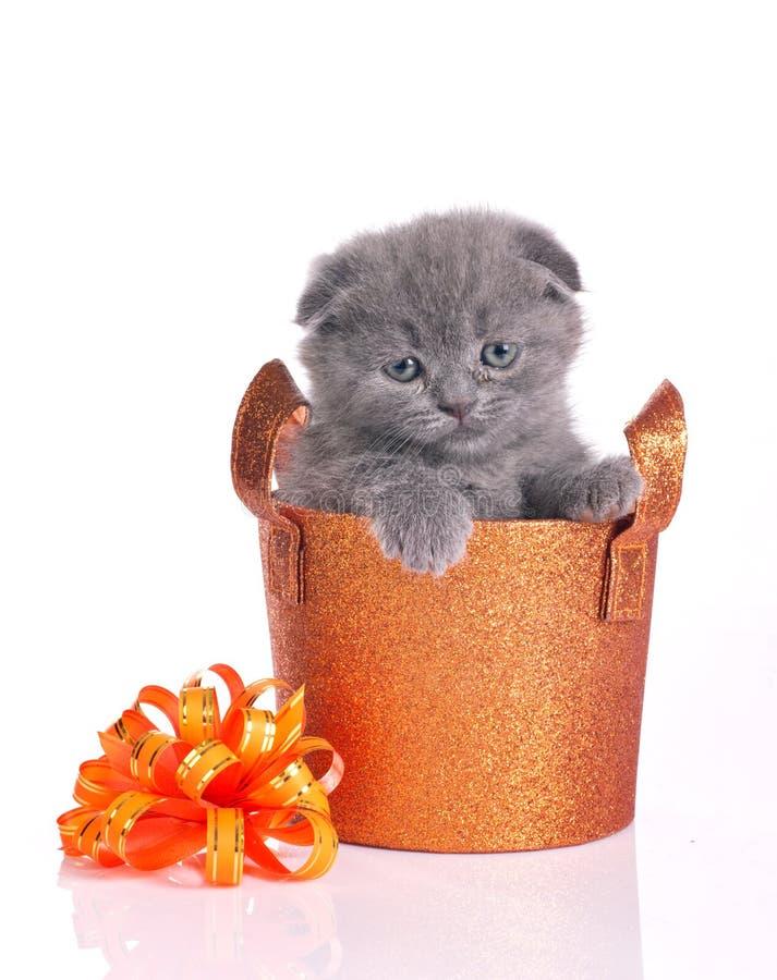 Χαριτωμένο γατάκι στο λαμπρό καλάθι στοκ φωτογραφίες