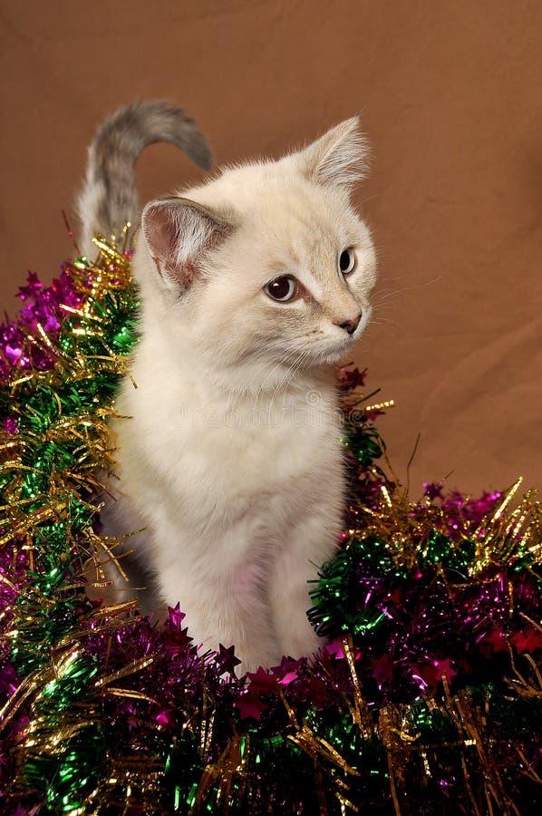 χαριτωμένο γατάκι Χριστο&upsi στοκ εικόνες με δικαίωμα ελεύθερης χρήσης