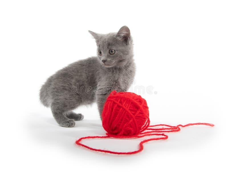 Χαριτωμένο γκρίζο γατάκι με την κόκκινη σφαίρα του νήματος στοκ εικόνες