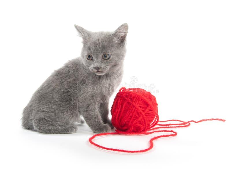 Χαριτωμένο γκρίζο γατάκι με την κόκκινη σφαίρα του νήματος στοκ εικόνα