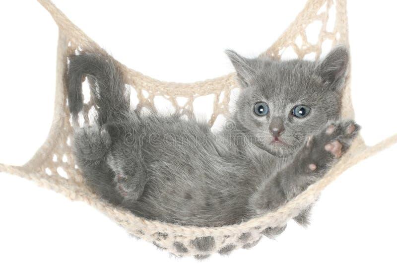 Χαριτωμένο γκρίζο γατάκι που βρίσκεται στην αιώρα στοκ φωτογραφίες με δικαίωμα ελεύθερης χρήσης