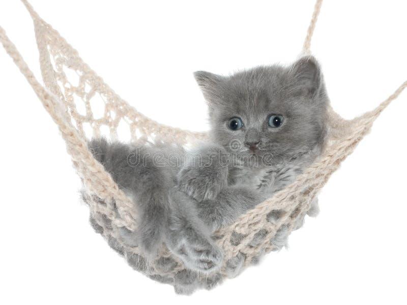 Χαριτωμένο γκρίζο γατάκι στην αιώρα στοκ φωτογραφίες