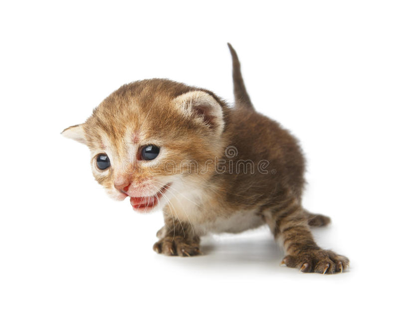 Χαριτωμένο γκρίζο ριγωτό γατάκι που απομονώνεται στοκ εικόνες