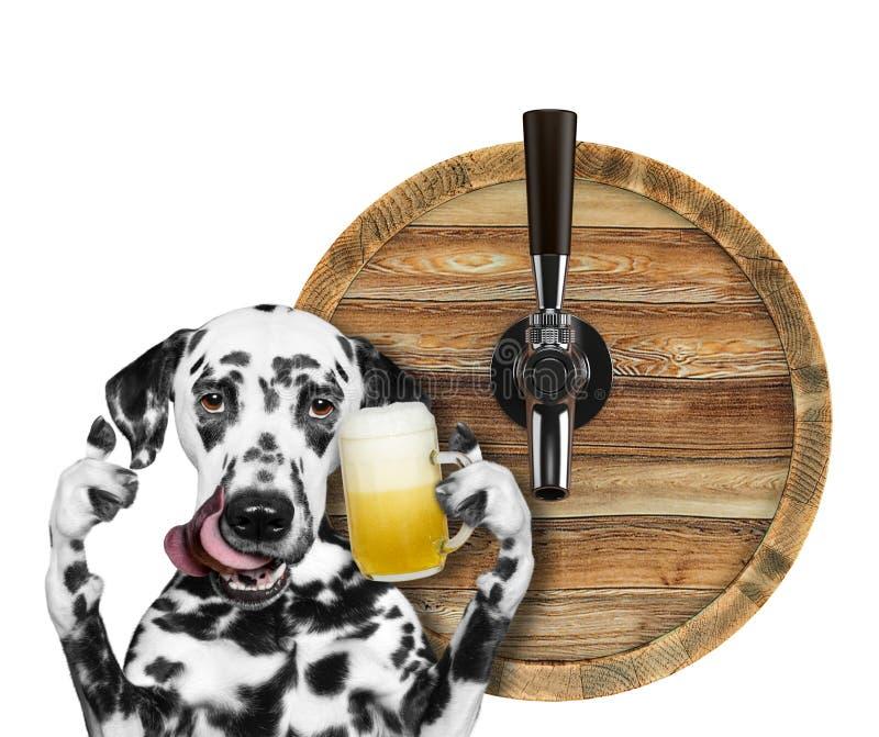 Χαριτωμένο δαλματικό σκυλί με ένα ποτήρι της μπύρας και του βαρελιού Απομονωμένος στο λευκό στοκ εικόνα με δικαίωμα ελεύθερης χρήσης
