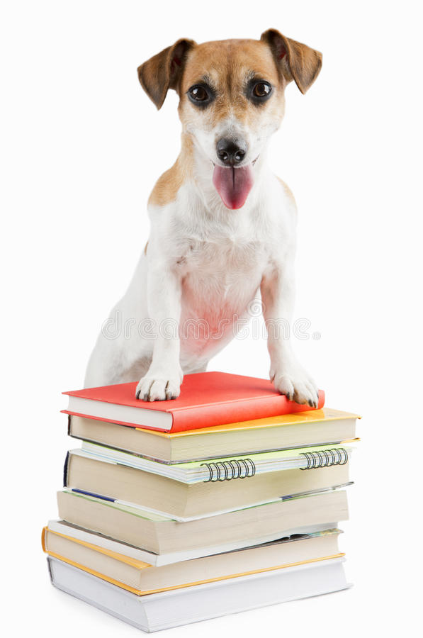 Χαριτωμένο ευτυχές σκυλί πίσω στο σχολείο στοκ εικόνες