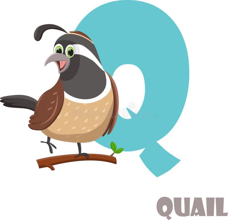 Χαριτωμένο ζωικό αλφάβητο ζωολογικών κήπων Γράμμα Q για τα ορτύκια στοκ εικόνες