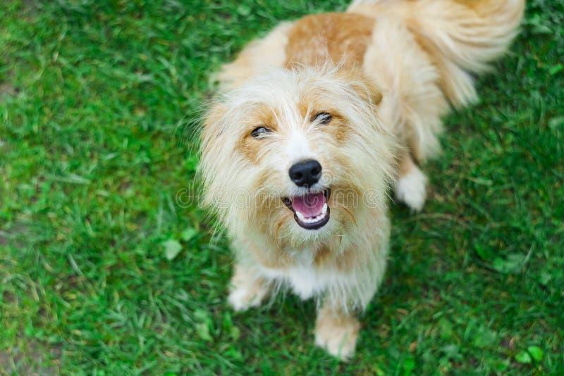 Χαριτωμένο και συγκινημένο σκυλί στη χλόη στοκ εικόνες