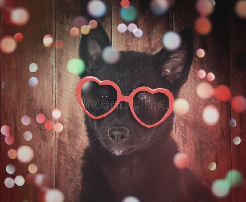 Χαριτωμένο κουτάβι κόμματος με τα γυαλιά και τα σπινθηρίσματα στοκ φωτογραφίες με δικαίωμα ελεύθερης χρήσης