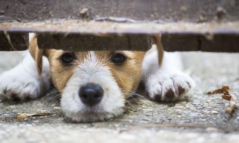 Χαριτωμένο κουτάβι σκυλιών που κοιτάζει πίσω από έναν φράκτη στοκ φωτογραφία
