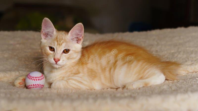 Χαριτωμένο κόκκινο γατάκι με τη σφαίρα στοκ φωτογραφίες με δικαίωμα ελεύθερης χρήσης