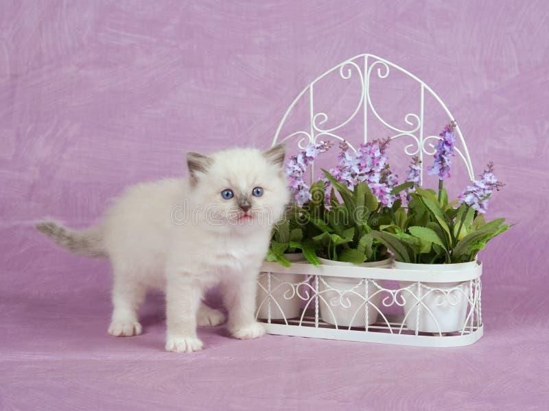 χαριτωμένο λουλουδιών trell στοκ εικόνες