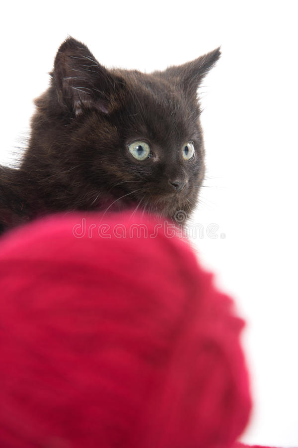 Χαριτωμένο μαύρο γατάκι και κόκκινη σφαίρα του νήματος στοκ εικόνες με δικαίωμα ελεύθερης χρήσης