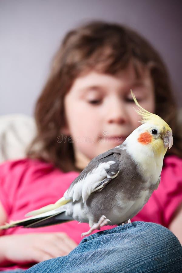 Κορίτσι με ένα cockatiel στοκ φωτογραφία