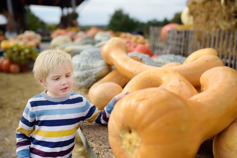 Χαριτωμένο μικρό παιδί που εξετάζει στη μεγάλη οργανική κολοκύθα στο γεωργικό αγρόκτημα το φθινόπωρο στοκ εικόνες με δικαίωμα ελεύθερης χρήσης