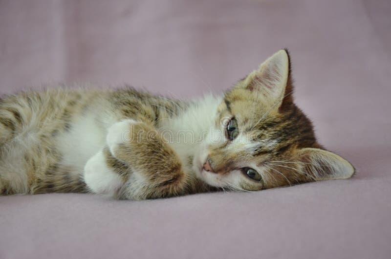Χαριτωμένο να βρεθεί γατάκι στοκ φωτογραφίες