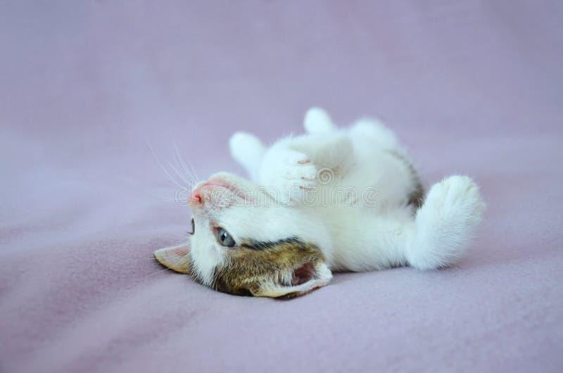 Χαριτωμένο να βρεθεί γατάκι στοκ φωτογραφία με δικαίωμα ελεύθερης χρήσης