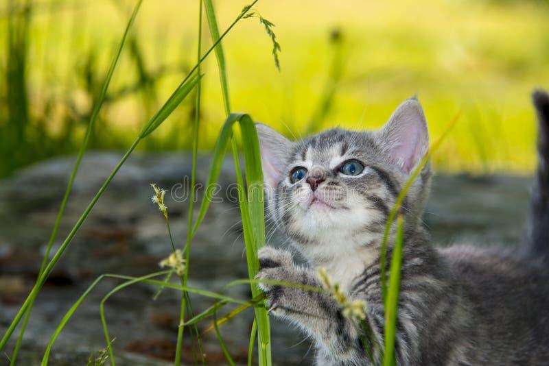 Χαριτωμένο παιχνίδι γατακιών στη χλόη στοκ εικόνα