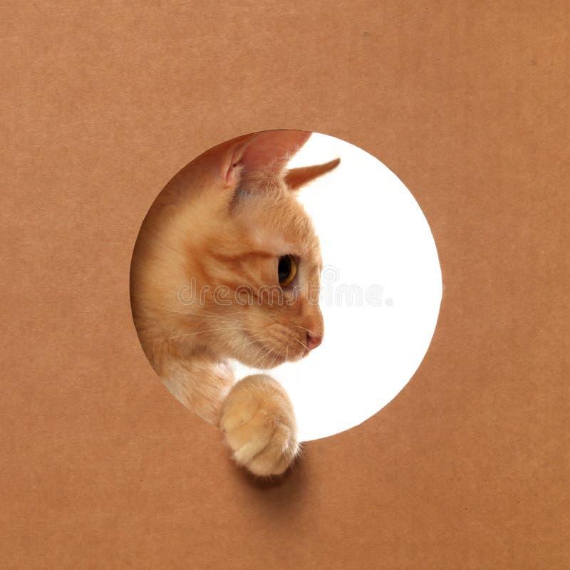 Χαριτωμένο πορτοκαλί τιγρέ παιχνίδι γατακιών σε ένα κουτί από χαρτόνι στοκ εικόνες