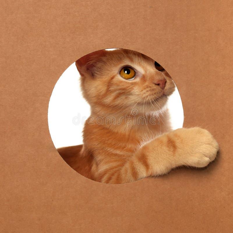 Χαριτωμένο πορτοκαλί τιγρέ παιχνίδι γατακιών σε ένα κουτί από χαρτόνι στοκ φωτογραφία με δικαίωμα ελεύθερης χρήσης
