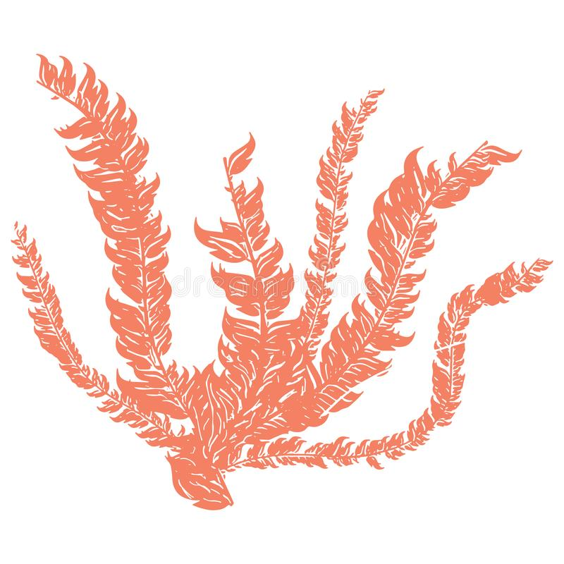 Χαριτωμένο πορτοκαλί υποβρύχιο φυκιών σύνολο μοτίβου απεικόνισης κινούμενων σχεδίων διανυσματικό Συρμένα χέρι απομονωμένα στοιχεί διανυσματική απεικόνιση
