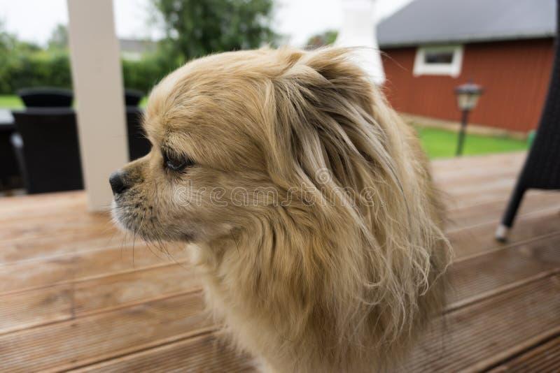 χαριτωμένο πορτρέτο σκυλιών Κοίταγμα στην πλευρά στοκ φωτογραφίες με δικαίωμα ελεύθερης χρήσης