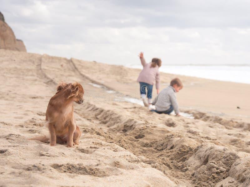 Χαριτωμένο σκυλί που φροντίζει τα ευτυχή παιδιά που παίζουν στην παραλία στις διακοπές στοκ εικόνες