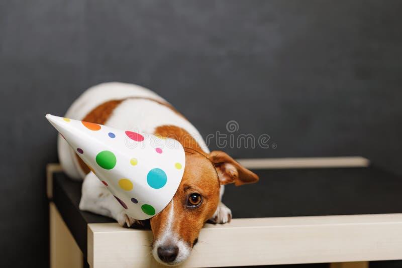 Χαριτωμένο σκυλί στο καπέλο κομμάτων καρναβαλιού στοκ εικόνα με δικαίωμα ελεύθερης χρήσης
