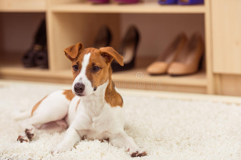 χαριτωμένο σκυλί λίγα στοκ εικόνα με δικαίωμα ελεύθερης χρήσης