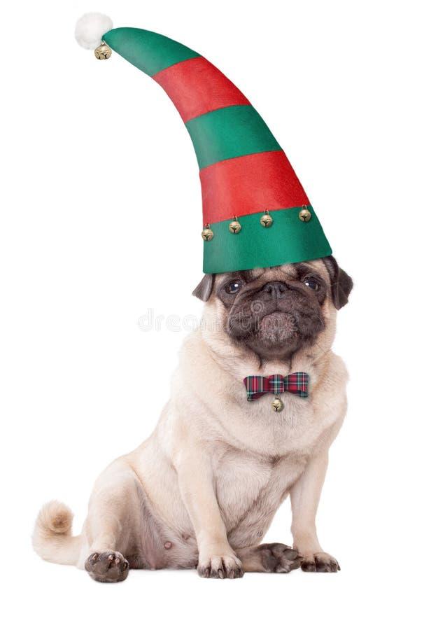Χαριτωμένο σκυλί κουταβιών μαλαγμένου πηλού που φορά ένα καπέλο νεραιδών για τα Χριστούγεννα, στο άσπρο υπόβαθρο στοκ εικόνες με δικαίωμα ελεύθερης χρήσης