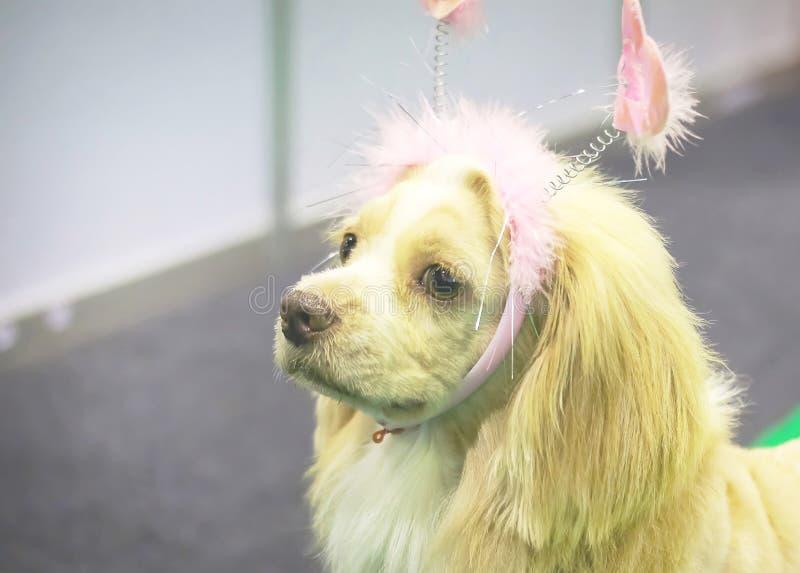 χαριτωμένο σκυλί πολύ στοκ φωτογραφίες με δικαίωμα ελεύθερης χρήσης