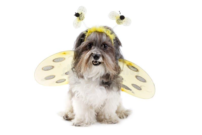 Χαριτωμένο σκυλί σε ένα bumble κοστούμι μελισσών στοκ φωτογραφίες