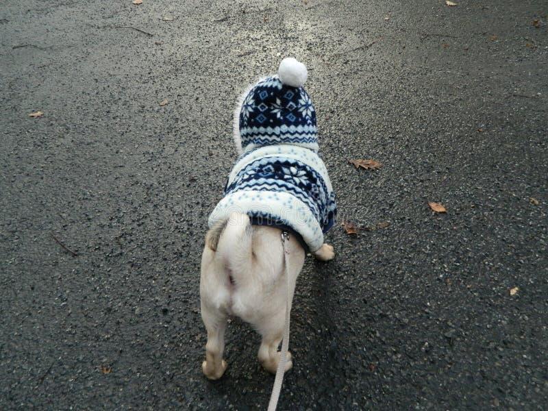 Χαριτωμένο σκυλί στο wintercoat που κοιτάζει στο δρόμο μπροστά στοκ φωτογραφίες με δικαίωμα ελεύθερης χρήσης