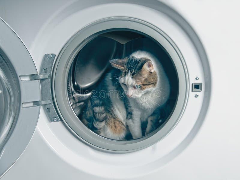 Χαριτωμένο τιγρέ κρύψιμο γατών στο πλυντήριο στοκ φωτογραφία