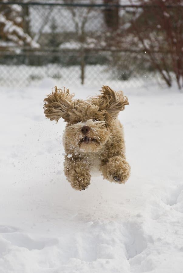 χαριτωμένο χιόνι κουταβιώ&nu στοκ φωτογραφία
