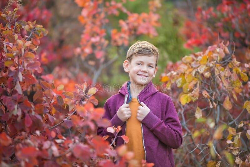 Χαριτωμένο όμορφο μοντέρνο αγόρι που απολαμβάνει το ζωηρόχρωμο πάρκο φθινοπώρου με το κόκκινο και άσπρο αγγλικό σκυλί ταύρων καλύ στοκ φωτογραφίες