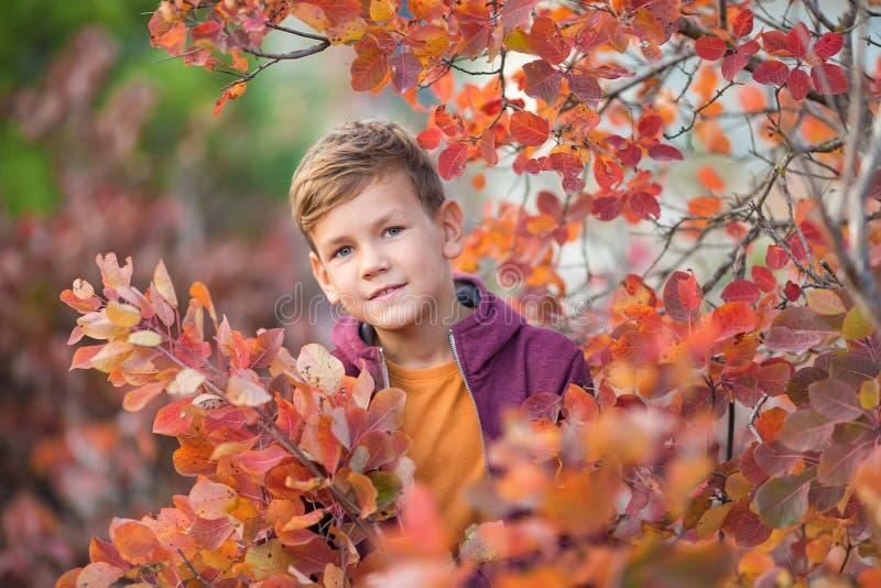 Χαριτωμένο όμορφο μοντέρνο αγόρι που απολαμβάνει το ζωηρόχρωμο πάρκο φθινοπώρου με το κόκκινο και άσπρο αγγλικό σκυλί ταύρων καλύ στοκ φωτογραφία με δικαίωμα ελεύθερης χρήσης