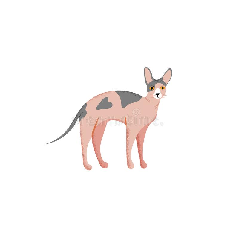Χαριτωμένο ύφος κινούμενων σχεδίων χαρακτήρα της γάτας Εικονίδιο της φυλής sphynx για το διαφορετικό σχέδιο ελεύθερη απεικόνιση δικαιώματος