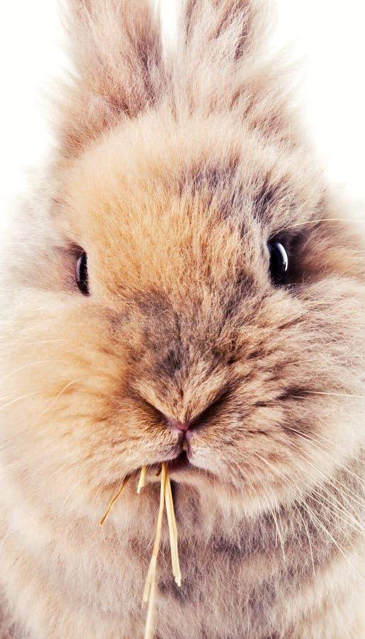 Χαριτωμένο bunny μάσημα σε ένα άχυρο στοκ εικόνα με δικαίωμα ελεύθερης χρήσης