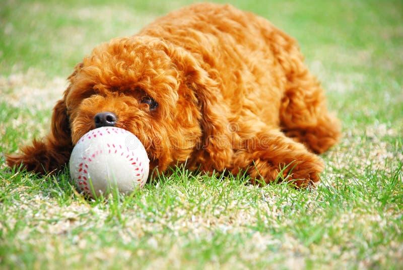 χαριτωμένο doggie στοκ φωτογραφίες