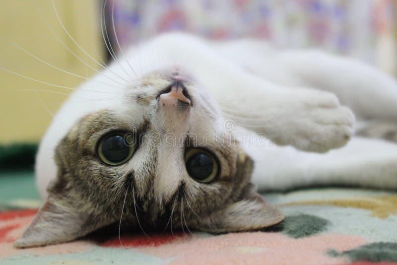 Χαριτωμένο Puss στοκ εικόνα με δικαίωμα ελεύθερης χρήσης