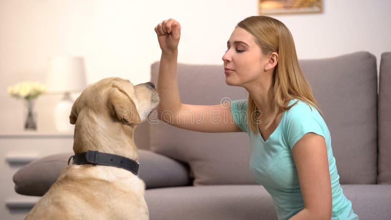 Χαρούμενη γυναίκα που εκπαιδεύει σκύλο και κρατά φαγητό, διδάσκει κατοικίδιο να γαβγίζει, πειθαρχία στοκ εικόνα