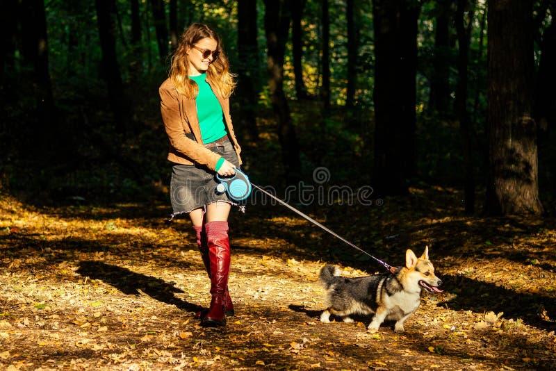 Χαρούμενη γυναίκα που περπατά στο ουαλικό κοργκί χοιρείο και προπονείται στο φθινοπωρινό δάσος έπεσε κίτρινο φύλλα ευχάριστα και  στοκ φωτογραφίες με δικαίωμα ελεύθερης χρήσης